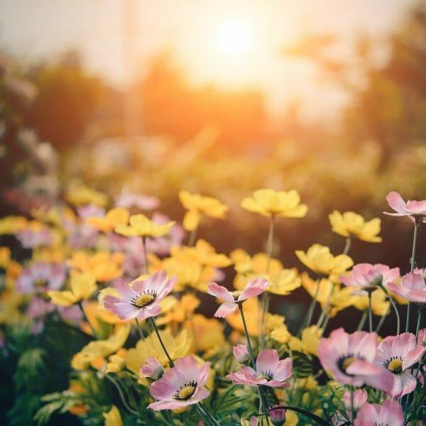 Schritt für Schritt gartenfit für den Frühling
